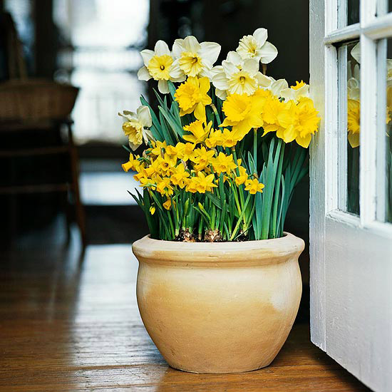 With bulbs, your spring can be fill of flowers and colors!