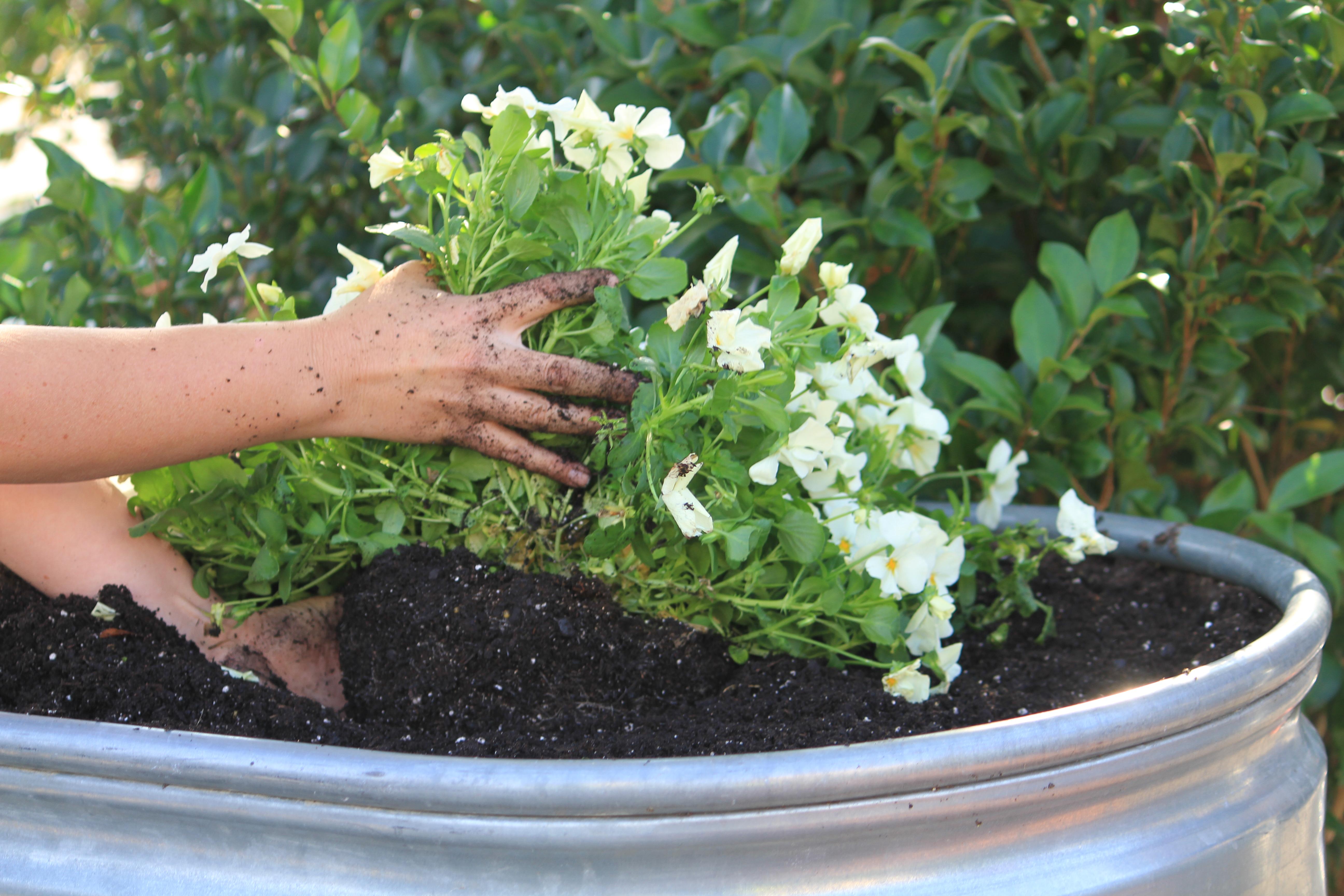 Planting Basket