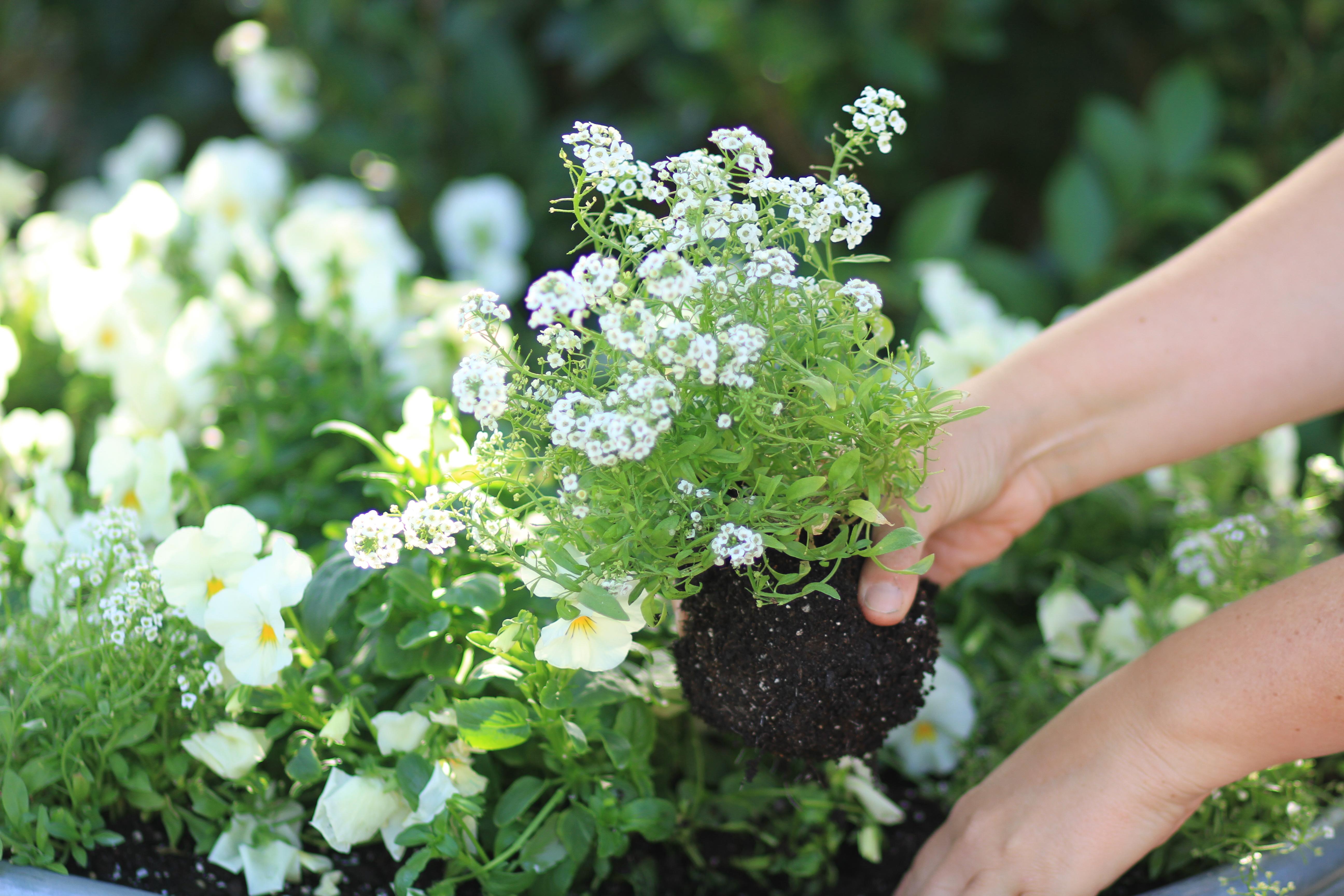 planting gallon