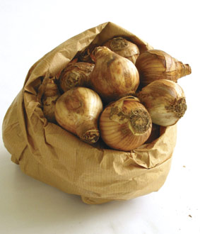 Paper bags work the best for storing your bulbs from year to year.