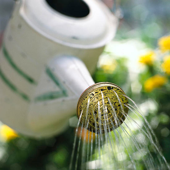 Watering in the South during the winter may be necessary (Photo Source: BHG.com)